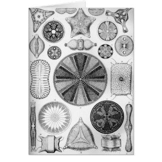 Ernst Haeckel Diatomea Card