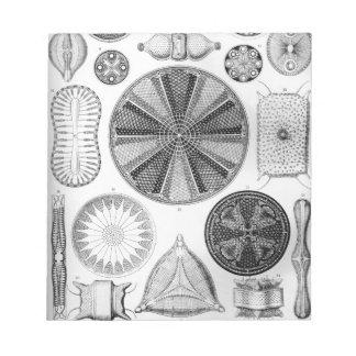 Ernst Haeckel Diatomea Notepad