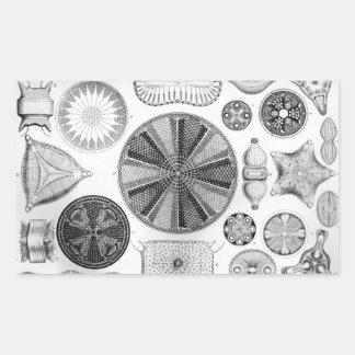 Ernst Haeckel Diatomea Rectangular Sticker