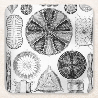 Ernst Haeckel Diatomea Square Paper Coaster