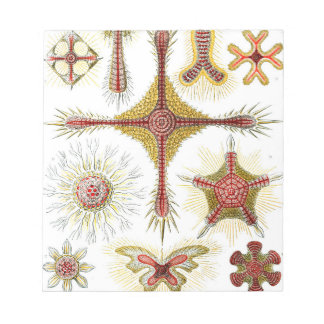 Ernst Haeckel Discoidea Notepad