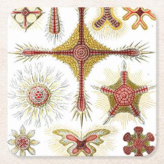 Ernst Haeckel Discoidea Square Paper Coaster