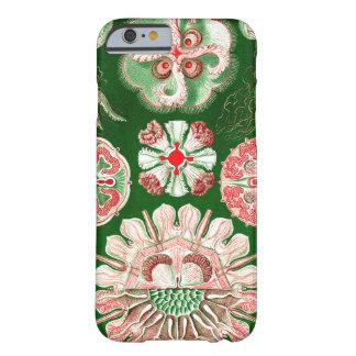 Ernst Haeckel Discomedusae (Aurelia) Barely There iPhone 6 Case