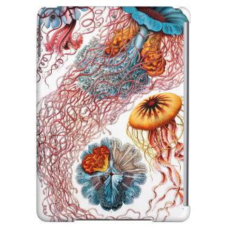 Ernst Haeckel Discomedusae Jellyfish