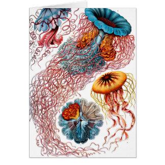 Ernst Haeckel Discomedusae Jellyfish Card