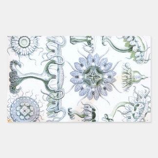 Ernst Haeckel Discomedusae Jellyfish Rectangular Sticker