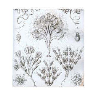 Ernst Haeckel Flagellata Notepad
