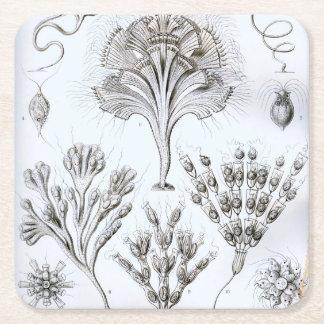 Ernst Haeckel Flagellata Square Paper Coaster