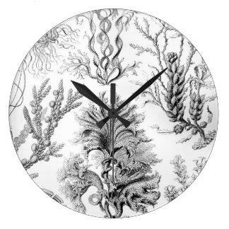 Ernst Haeckel Fucoideae weeds! Large Clock