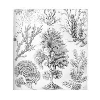 Ernst Haeckel Fucoideae weeds! Notepad