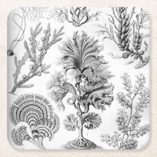 Ernst Haeckel Fucoideae weeds! Square Paper Coaster