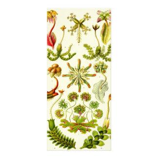 Ernst Haeckel Hepaticae Rack Card Template