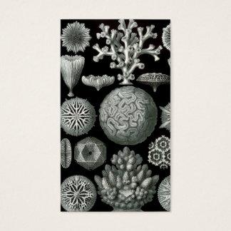 Ernst Haeckel Hexacorallia Coral Business Card