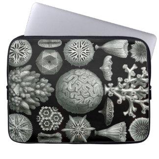 Ernst Haeckel Hexacorallia Coral Laptop Sleeve