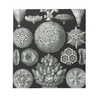 Ernst Haeckel Hexacorallia Coral Notepad