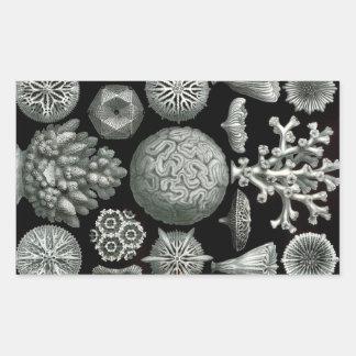 Ernst Haeckel Hexacorallia Coral Rectangular Sticker