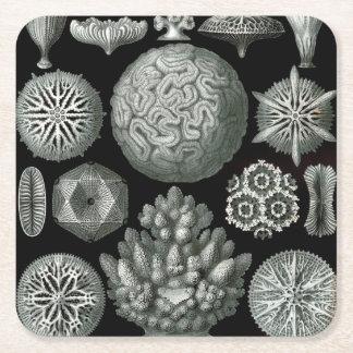 Ernst Haeckel Hexacorallia Coral Square Paper Coaster