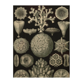 Ernst Haeckel Hexacorallia Coral Wood Wall Decor