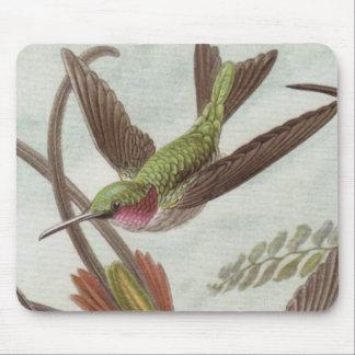 Ernst Haeckel Hummingbird Mouse Pad
