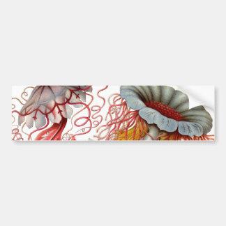 Ernst Haeckel - Kuntsformen der Nature Product Bumper Sticker