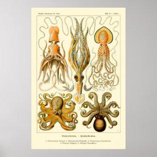 Ernst Haeckel Octopus Poster