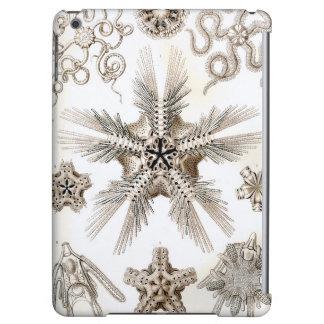 Ernst Haeckel Ophiodea brittle Stars