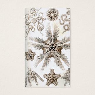 Ernst Haeckel Ophiodea brittle Stars Business Card
