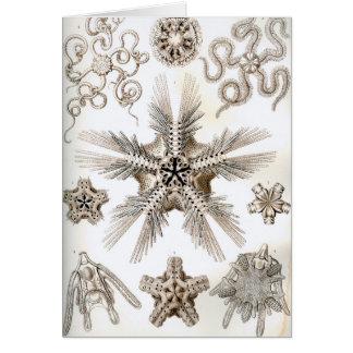 Ernst Haeckel Ophiodea brittle Stars Card