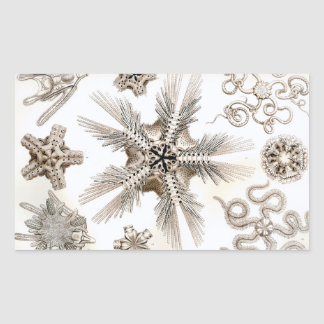 Ernst Haeckel Ophiodea brittle Stars Rectangular Sticker