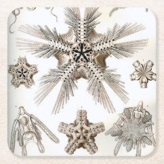 Ernst Haeckel Ophiodea brittle Stars Square Paper Coaster