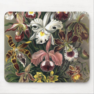 Ernst Haeckel - Orchideae Detail1 Mouse Pad