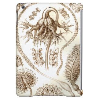 Ernst Haeckel Pennatulida Coral