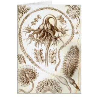 Ernst Haeckel Pennatulida Coral Card