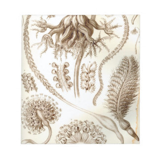 Ernst Haeckel Pennatulida Coral Notepad