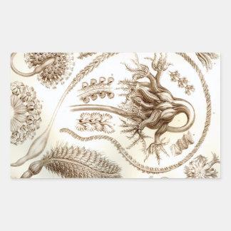 Ernst Haeckel Pennatulida Coral Rectangular Sticker
