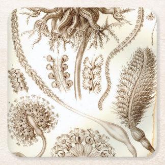 Ernst Haeckel Pennatulida Coral Square Paper Coaster