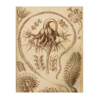 Ernst Haeckel Pennatulida Coral Wood Print