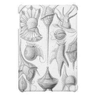 Ernst Haeckel Peridinea worms iPad Mini Case