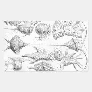 Ernst Haeckel Peridinea worms Rectangular Sticker