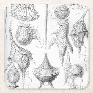 Ernst Haeckel Peridinea worms Square Paper Coaster