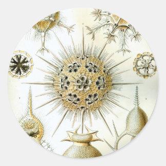 Ernst Haeckel Phaeodaria Classic Round Sticker