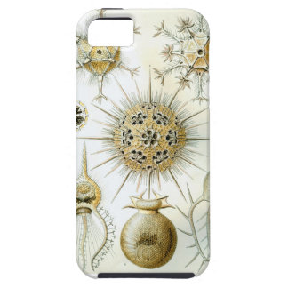 Ernst Haeckel Phaeodaria Tough iPhone 5 Case