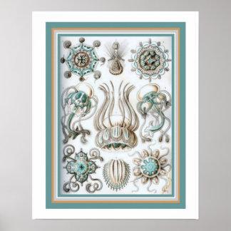 "Ernst Haeckel "" Sacred Geometry"" 16 x 20 Print"
