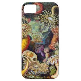 Ernst Haeckel  Sea anemones iPhone 5 Case