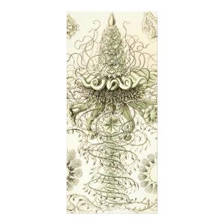 Ernst Haeckel Siphonophorae Customized Rack Card