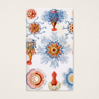 Ernst Haeckel Siphonophorae jellyfish bluebottle! Business Card