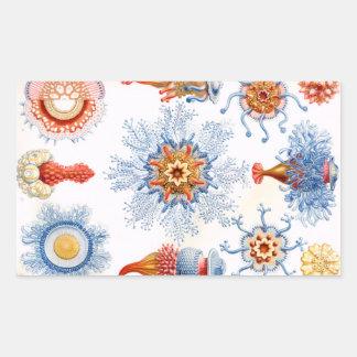 Ernst Haeckel Siphonophorae jellyfish bluebottle! Rectangular Sticker