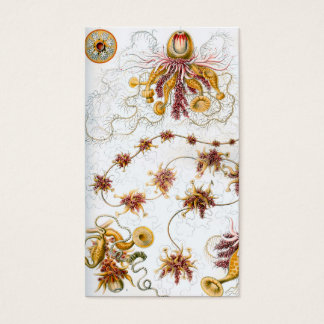Ernst Haeckel Siphonophorae Jellyfish Business Card