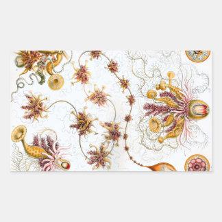 Ernst Haeckel Siphonophorae Jellyfish Rectangular Sticker