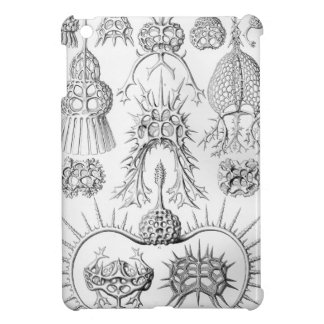 Ernst Haeckel  Spyroidea Sea Creatures Cover For The iPad Mini